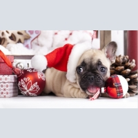 Dogs, Another, Christmas discounts! Sold cheap puppies